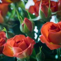 розы :: Andrei Naronski