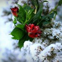 В снежном плену ...2 :: TATYANA PODYMA
