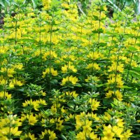 Желто-зеленое :: Damir Si
