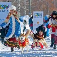 """Международный фестиваль ездового спорта """"Волга квест 2015"""" :: Сергей Щербатюк"""