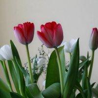 Тюльпаны :: Марина Устюгова