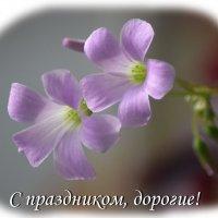 С праздником, дорогие женщины! :: Игорь Кузьмин