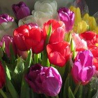 С первым весенним праздником! :: Ната Волга