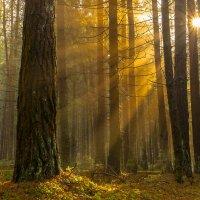 утро  в лесу :: Александр Есликов