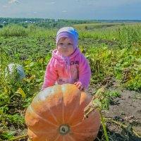 Время сбора урожая. :: Elena Izotova