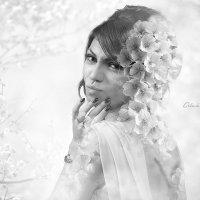 черно-белая весна :: Алексей Максимовский