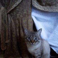 Sapa . SAPFIR. :: Елена Мартынова
