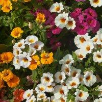 Во саду ли в огороде...)) :: Владимир Хиль