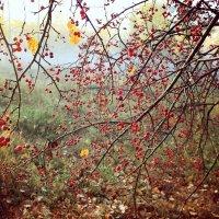 Осень2 :: Елена Пономарева