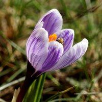 Весна... :: Галина Кучерина