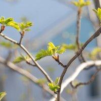 Хочется весны :: Иваннович *