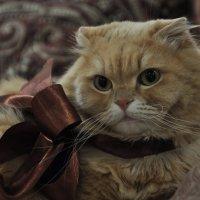 8 марта...Кот-подарок! :: Ирина Токарева