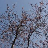 супер весной))) :: İsmail Arda arda