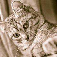 Котёнок на компьютере :: Елена Ел