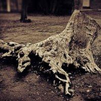 Не дерево :: Eugene Kurenko