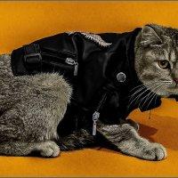 Во какие мы модные или топ-модель из Британии-из серии Кошки очарование мое! :: Shmual Hava Retro