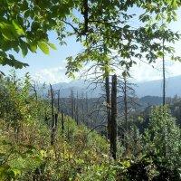 В лесу, на тропе туристической :: Сергей Анатольевич