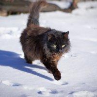 Без кота жизнь не та! :: Ната Кова