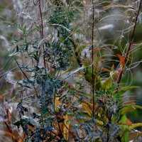 Краски Осени... :: VADIM *****