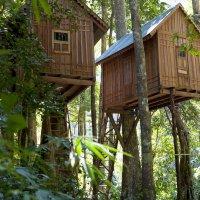 Вот такие дома я увидел в джунглях.. :: Дмитрий Просвирнин