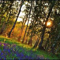 ближе к закату :: Ольга Степанова