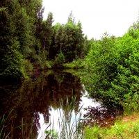 Лесное озеро :: alek48s