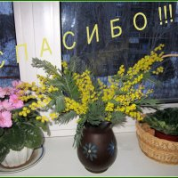 Всем друзьям !!! :: Мила Бовкун