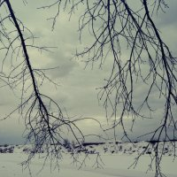 ветки :: Андрей Кончин