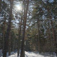 март в Сибири :: Михаил Фролов