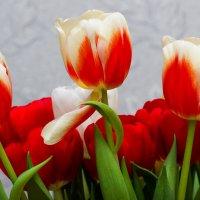 Тюльпаны :: Михаил