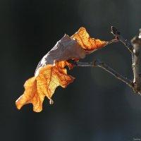 Как лист увядший падает на душу :: Swetlana V