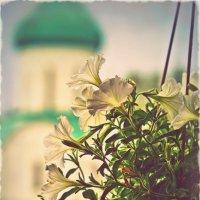 Летне-цветочное... :: Ольга Сергеева