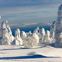 Заснеженный лес :: Max Golovanov