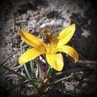 Опьяняющий запах весны :: Валерий Басыров