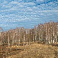Весенний пейзаж :: Олег Козлов
