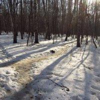 Img_2889 - А там еще птички пели! Почуяли весну! :: Андрей Лукьянов
