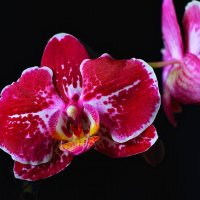 Орхидея 1 :: Viktor Eremenko