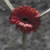 цветок :: VAHE DILANCHYAN