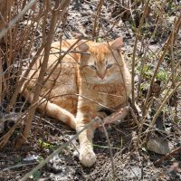 Солнечно-весенний кот :: Владимир Волик
