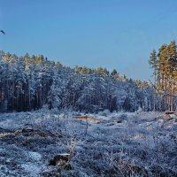 Была  зима. :: Валера39 Василевский.