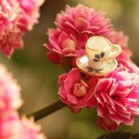 Чай на цветке :: Татьяна Баценкова