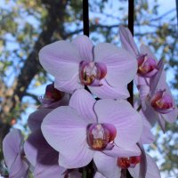 Орхидея) :: Марина Хрущева