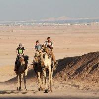 Пустыня :: Наташа Шамаева