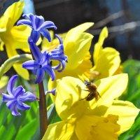 Весна :: Владимир Клюев