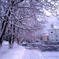 Было белым- бело и деревья упали от снега :: Елена Семигина