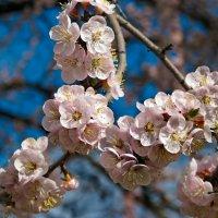 Весна. :: Михаил Болдырев