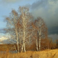 Осенняя туча. :: nadyasilyuk Вознюк