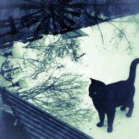 О крышах и котах :: Ирина Сивовол