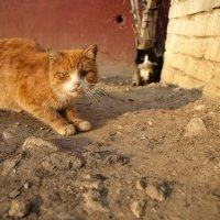 Бездомные котики :: alex_belkin Алексей Белкин