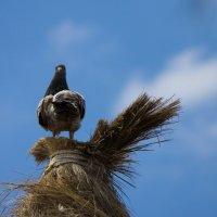 Тенерифе и голуби :: Kira Sunlife Shershneva